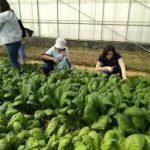 Đơn hàng nông nghiệp tỉnh Nagago theo visa đặc định