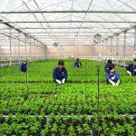 Đơn hàng nông nghiệp ở Kagoshima