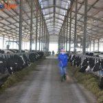 Đơn hàng nông nghiệp theo visa đặc định ở Hokkaido