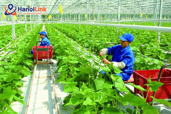 xuất khẩu lao động Nhật Bản ngành nông nghiệp