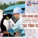 Đơn hàng chăn nuôi bò theo visa đặc định tại tỉnh Chiba