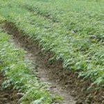 Đơn hàng đặc định nông nghiệp nam Ibaraki